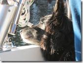 Sailing back to Shilshole 006