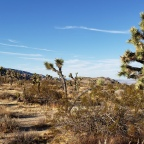Joshua Tree National Park…watch for jumping Cholla