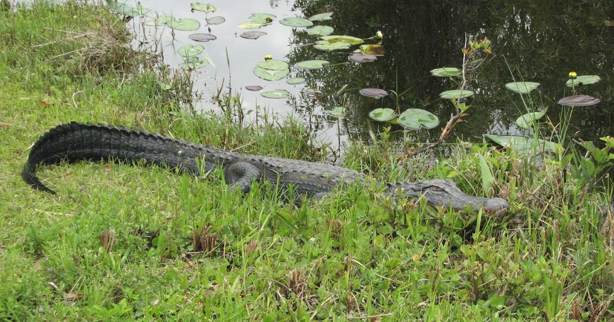Bicycling the Everglades